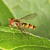 vliegen · shot · tonen · vergadering · bloem · natuur - stockfoto © scooperdigital