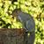 grey squirrel in autumn stock photo © scooperdigital