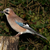 синий · Перу · птиц · белый - Сток-фото © scooperdigital