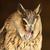 long eared owl stock photo © scooperdigital
