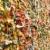 graffiti · sikátor · fedett · város · festék · szemét - stock fotó © searagen