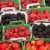 Display Of Berry Cartons stock photo © searagen