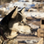 köpek · büyük · kış · evler · takım · bireysel - stok fotoğraf © searagen