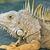 イグアナ · トカゲ · クローズアップ · 背景 - ストックフォト © searagen