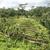hillside rice paddies on bali stock photo © searagen