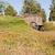 wagon in flower field stock photo © searagen