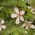 mandula · fa · virág · virág · rózsaszín · bokeh - stock fotó © selenamay
