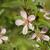 amandel · boom · bloesem · bloem · roze · bokeh - stockfoto © selenamay
