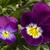 lila · fehér · makró · szelektív · fókusz · központ · virág - stock fotó © selenamay