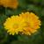 virágok · fehér · természet · szépség · gyógyszer · fej - stock fotó © selenamay