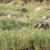 african elephant   loxodonta africana stock photo © serendipitymemories