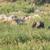 csoport · elefánt · park · három · elefántok · út - stock fotó © serendipitymemories