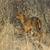 New born Nyala - Tragelaphus angasii stock photo © serendipitymemories