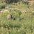グループ · 象 · 公園 · 3 ·  · 道路 - ストックフォト © serendipitymemories