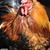 gyönyörű · kakas · fű · szépség · madár · zöld - stock fotó © serg64