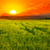 beautiful sunset on wheat field stock photo © serg64