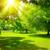 林間の空き地 · 光 · 草 · 太陽 · 緑 · 葉 - ストックフォト © serg64