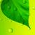 水面 · 緑色の葉 · 新しい · 生まれる · 詳細 · 水 - ストックフォト © serg64