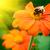 arı · çiçekler · bahar · çiçekli · meyve · ağacı · bahçe - stok fotoğraf © serg64