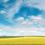 zöld · búzamező · kék · ég · nap · fehér · felhők - stock fotó © serg64