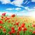 klaprozen · veld · stralen · zon · bloem · voorjaar - stockfoto © serg64