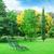 декоративный · кустарник · лет · парка · текстуры · весны - Сток-фото © serg64