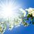солнце · звездой · лепестков · цветок · природы - Сток-фото © serg64