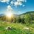 hegy · tájkép · fenyőfa · domboldal · napos · idő · lucfenyő - stock fotó © serg64