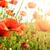 klaprozen · veld · stralen · zon · hemel · bloem - stockfoto © serg64