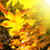 kleurrijk · bladeren · zonnestraal · ochtend · boom · bos - stockfoto © serg64