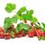 gyümölcsök · gyűjtemény · őszibarackok · eprek · anime · izolált - stock fotó © serg64