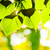 bellezza · estate · giorno · foresta · abstract · stagionale - foto d'archivio © serg64