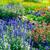 manzara · yeşil · alan · sarı · çiçekler · mavi · gökyüzü · büyük - stok fotoğraf © serg64