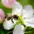 honingbij · nectar · violet · bloem · natuur · oranje - stockfoto © serg64