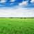 ganância · campo · de · trigo · blue · sky · nuvens · branco · céu - foto stock © serg64