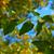緑の葉 · 青空 · 空 · 春 · 森林 - ストックフォト © serge001