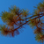 Pine branch against blue sky stock photo © serge001