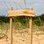 木製 · 森林 · 草 · 立って · 自然 · 背景 - ストックフォト © sharpner