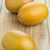three whole golden kiwifruit kiwi stock photo © shawnhempel