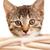 子猫 · 小さな · 国内の · 見える · 外に · バスケット - ストックフォト © ShawnHempel