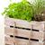 ervas · manjericão · alecrim · mesa · de · madeira · comida · folha - foto stock © shawnhempel