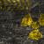 grunge · jądrowej · promieniowanie · symbol · ściany · tle - zdjęcia stock © shawnhempel