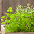 herbs in wooden box stock photo © shawnhempel