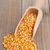 corn kernels stock photo © shawnhempel