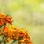 renkli · altın · parlak · tebrik · kartı · cenaze · sevmek - stok fotoğraf © sherjaca