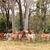 stado · wołowiny · bydła · krów · wiejski · queensland - zdjęcia stock © sherjaca