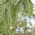 íny · levelek · űrlap · keret · fehér · levél - stock fotó © sherjaca
