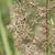 australisch · wildflower · flora · voorjaar · inlander · gras - stockfoto © sherjaca