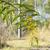 オーストラリア人 · 春 · 花 · 中性 · コピースペース · ツリー - ストックフォト © sherjaca