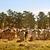 australisch · rundvlees · kudde · bruin · vee · live - stockfoto © sherjaca